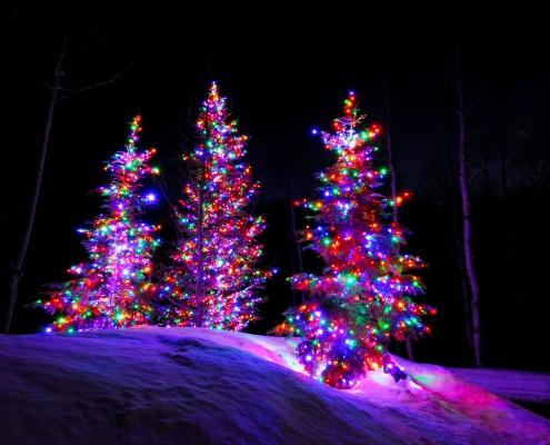 Multi Color Christmas Trees Lights