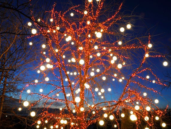 Light Gorgeous Christmas Trees in Your Yard