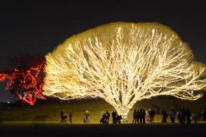 Draper City Tree 2015