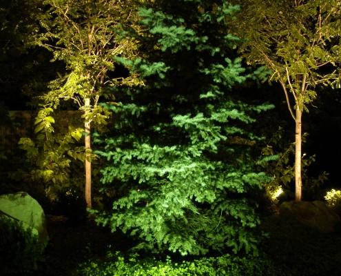 pine and deciduous tree landscape lighting