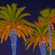 Christmas light display in a group of palm trees at night.