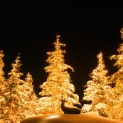 Christmas Tree Lighting Installation SLC