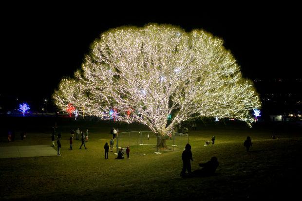 Draper Tree of Life by Brite Nites