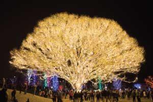 Draper City Tree